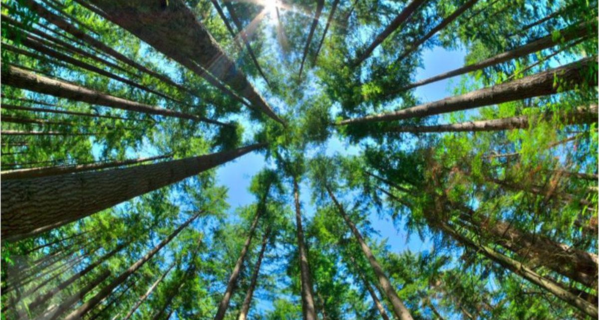 4 Manusia Ini Hidup di Pohon