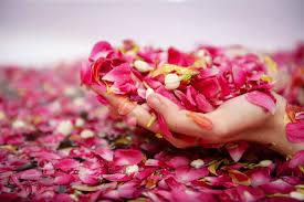 Bunga-Bunga Bermanfaat Bagi Kesehatan