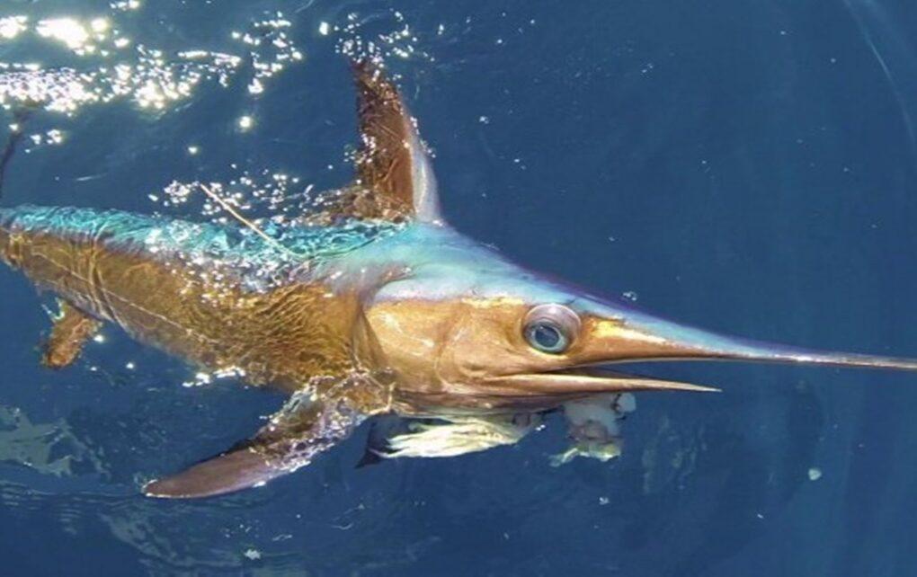 5 Jenis Ikan yang Berbahaya untuk Dikonsumsi