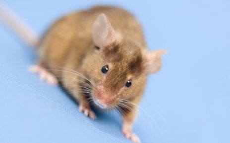 7 Cara Mengusir Tikus